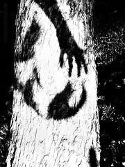 25 Enrique Mezquita (espaciosparaelarte) Tags: arte artecontemporáneo bellasartes blancoynegro cultura comunidaddemadrid creación exposición exposiciones espaciosparaelarte calle universos vuelo paloma hoja agua gota mano sombra ojo papel detalle contraste díptico davidjiménez cielo