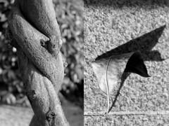 17 Jesús Caballero (espaciosparaelarte) Tags: arte artecontemporáneo bellasartes blancoynegro cultura comunidaddemadrid creación exposición exposiciones espaciosparaelarte calle universos vuelo paloma hoja agua gota mano sombra ojo papel detalle contraste díptico davidjiménez cielo