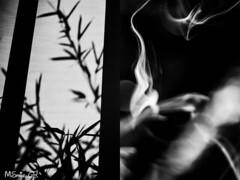 35 Gema Ramírez.jpg (espaciosparaelarte) Tags: arte artecontemporáneo bellasartes blancoynegro cultura comunidaddemadrid creación exposición exposiciones espaciosparaelarte calle universos vuelo paloma hoja agua gota mano sombra ojo papel detalle contraste díptico davidjiménez cielo