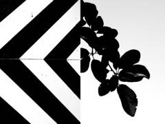 23 Carmen Riestra (espaciosparaelarte) Tags: arte artecontemporáneo bellasartes blancoynegro cultura comunidaddemadrid creación exposición exposiciones espaciosparaelarte calle universos vuelo paloma hoja agua gota mano sombra ojo papel detalle contraste díptico davidjiménez cielo