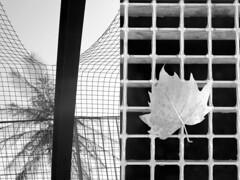 20 Jesús Caballero (espaciosparaelarte) Tags: arte artecontemporáneo bellasartes blancoynegro cultura comunidaddemadrid creación exposición exposiciones espaciosparaelarte calle universos vuelo paloma hoja agua gota mano sombra ojo papel detalle contraste díptico davidjiménez cielo