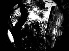 07 Francisco Martínez (espaciosparaelarte) Tags: arte artecontemporáneo bellasartes blancoynegro cultura comunidaddemadrid creación exposición exposiciones espaciosparaelarte calle universos vuelo paloma hoja agua gota mano sombra ojo papel detalle contraste díptico davidjiménez cielo