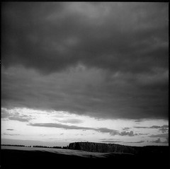 ᚏ закат (petersoloway) Tags: yashicamat124g ilford ilfordfilm xp2 iso400 c41 middleformat squarebw 120film 6x6 sunset forest horizont sky evening dark shadows analog film scan tlr