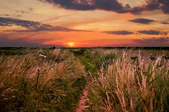 Another day, another walk! Thornham Norfolk. Walk 200 only 463 to go! (Glenn Birks) Tags: thornham norfolk sunrise