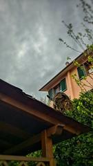 Attacco rapido (andrealamalfa) Tags: gatto cat animale animal legno wood marzo march nuvole clouds cielo sky scatto posa pose