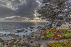 Nature Says Good Evening (Michael F. Nyiri) Tags: 17miledrive pebblebeach carmel sunset california nature clouds explored trees monterey montereycypress pacificgrove