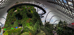 Rings Around the Mountain (shapeshift) Tags: architecture biodome cloudforest cloudforestdome cloudforestmountain conservatory davidpham davidphamsf dome gangways garden gardensbythebay greenhouse iphone iphonephoto iphonephotography iphonex iphonexphoto iphonexphotography nikon panorama people plants shapeshift singapore vegetation walkways centralregion