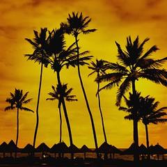 Yellow Sky (image.maraujo) Tags: ntg natgeo visual beautifulday weekend vacation brazil beach coconut nature yellow sky sun sunset