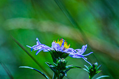 Flowers (NickyBobby1) Tags: skagitwildlifearea washington westernwashington nature