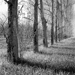 The Way Home (JasonRobertJones) Tags: leelanau peninsula michigan kodak tmax hasselblad piezography trees film black white bw