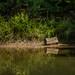 Stump on shore