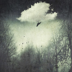 from all sides (Dyrk.Wyst) Tags: winter conceptual cloud photoillustration fog forest landscape mood nature outdoor woodland composing surreal mixedmedia bird dreamy trees silhouettes upidedown doubleexposure vorschlag photoshelter