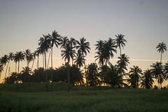 DSC_5846_edited (Proflázaro) Tags: brasil alagoas cidade marechaldeodoro praiadofrancês árvore palmeira anoitecer entardecer pôrdosol céu paisagem paisagemnatural viagem viagempelonordeste nordeste nordestedobrasil beleza belezabrasileira horizonte nikon nikond3100