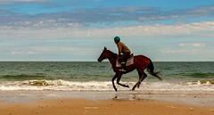 Au grand galop... (J&S.) Tags: charentemaritime ilederé plagedelaconche océan cheval cavalier galop nature