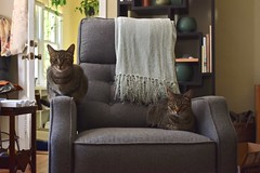 tabby times two (rootcrop54) Tags: cricket male mackerel tabby cousin males tabbies firstcousins recliner neko macska kedi 猫 kočka kissa γάτα köttur kucing gatto 고양이 kaķis katė katt katze katzen kot кошка mačka gatos maček kitteh chat ネコ cc100 cc300