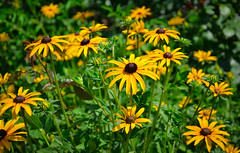 Flowers. (denkuznets81) Tags: flower floral nature yellow garden green summer beautiful цветы цветок природа лето сад bloom blossom