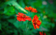 Flowers. (denkuznets81) Tags: red summer flower macro green nature floral beautiful garden blossom bloom природа цветы цветок макро