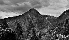 Wedge Mountain and Other Ridges and Peaks of the Stuart Range (Black & White) (thor_mark ) Tags: anseladamslookfromcapturenx2 azimuth198 balconyviewatenzianinn blackwhite canvas capturenx2edited cascaderange cloudy colorefexpro day7 enzianinn evergreentrees evergreens hillsideoftrees ideasigotfromothers landscape lookingssw mountainpeak mountains mountainsindistance mountainsoffindistance mountainside nature nikond800e outside overcast pacificranges portfolio project365 ridge ridges rollinghillsides southwashingtoncascades stuartrange trees triptonorthcascadesandwashington wedgemountain wenatcheemountains leavenworth washington unitedstates