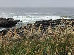 Oregon Coast (cliffordswoape) Tags: rocks waves must fog pacific usa surf grass capeperpetua thor'swell coast oregon