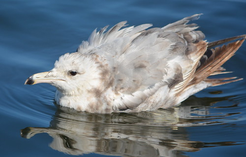 Flickriver: seagull pool