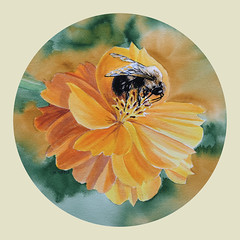 Bumblebee on the Cosmos *Explore* (bellydanser) Tags: watercolor painting art artwork fineart floral cosmo flora flower bee bumblebee insect animal fauna paintingfromphotographs