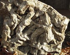 Bioturbated sandstone (James St. John) Tags: burrow burrows burrowed bioturbated sandstone