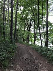 Trail Around Bowman Lake (amyboemig) Tags: bowman lake state park friends sparkies camping july summer hike trail ny