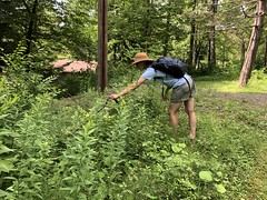 Corinna Examining A Plant With The Help Of Foresta's Cane (amyboemig) Tags: bowman lake state park friends sparkies camping july summer corinna plant poke cane hike ny