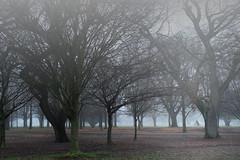 Foggy morning (Maureen Pierre) Tags: hagleypark foggy morning winter landscape christchurchbotanicgardens christchurch