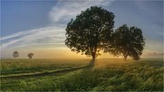 Morgenstund (Robbi Metz) Tags: germany bavaria reischenau augsburgwestlichewälder landscape morning sunrise trees sky clouds grassland sonyilce7m3