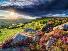 First heather of summer (Stephen Elliott Photography) Tags: peakdistrict derbyshire hopevalley baslow edge curbar heather summer olympus 714mm kase filters