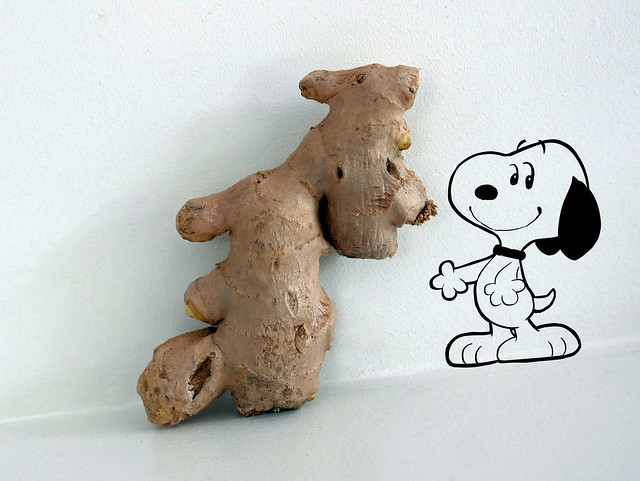 Ginger snoopy