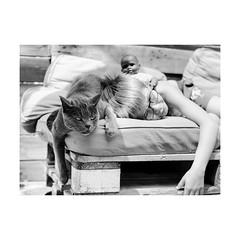 ... (jcois.) Tags: pentax portrait streetportrait street regard blackwhite bw noirblanc monochrome people personnes jcois streetphotographer rouen portraitderue cat chat