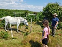 Penmaen Burrows (davidmcnuh) Tags: wales swansea gower horse pony ursulab gaynorb penmaen penmaenburrows