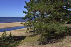 Saulrieta taka (olaf_alien) Tags: olafalien olaf alien saulrieta taka latvia saulkrasti river forest nature landscape tree sunny summer sea beach afs dx nikkor 1224mm f4 nikon d3200