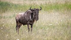 (Markus Hill) Tags: africa travel nature animal canon tanzania safari manyara tarangire tansania 2019
