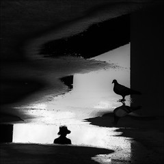 F_MG_4184-BW-Canon 6DII-Tamron 28-300mm-May Lee 廖藹淳 (May-margy) Tags: maymargy bw 黑白 人像 逆光 剪影 鴿子 雨後 水灘 倒影 橋下 街拍 線條造型與光影 天馬行空鏡頭的異想世界 心象意象與影像 幾何構圖 點人 台灣攝影師 台北市 台灣 中華民國 fmg4184bw portrait backlighting silhouette pegion raining puddle bridge reflection streetviewphotography humaningeometry humanelement taiwanphotographer taipeicity taiwan repofchina canon6dii tamron28300mm maylee廖藹淳 linesformsandlightandshadow mylensandmyimagination naturalcoincidencethrumylens 臉譜faces places