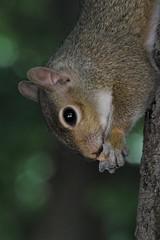 IMG_4017_E-10_O40 (eugeniointernullo) Tags: nature natura animal animali wild selvatico parcovalentino park torino turin piemonte lacittàmetropolitanaditorinovistadavoi