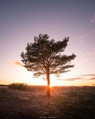 Last minutes of the day! (laurilehtophotography) Tags: suomi finland kokkola sea beach tree sunset summer evening sun clouds nikon d750 sigma 20mm art wideangle benro auringonlasku amazing europe