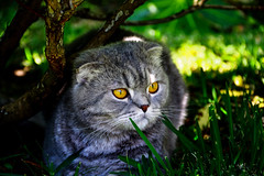 Fotogenia Animal [#1] (photographic.zone.instagram) Tags: cats cat beautifulcat landscape wonderful herb nature natureza orange green photographiczone portugal