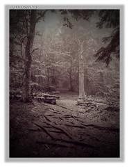 Forêt enchantée 3  -  Bewitched forest 3 (jamesreed68) Tags: petitballon forêt alsace grandest 68 hautrhin wasserbourg paysage nature