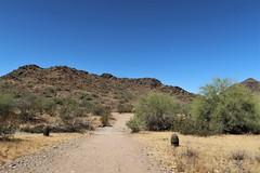 Phoneix AZ ~ North Mountain Park (karma (Karen)) Tags: phoenix arizona northmountainpark desert mountains trails cactus succulents bushes hcs