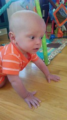 """Sam Crawls on the Floor • <a style=""""font-size:0.8em;"""" href=""""http://www.flickr.com/photos/109120354@N07/48387955681/"""" target=""""_blank"""">View on Flickr</a>"""