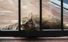 Alice on the terrace (Alfredo Liverani) Tags: happy caturday happycaturday cat cats gato coolcats cool canong5x canon g5x pointandshoot point shoot ps flickrdigital flickr digital camera cameras 2082019 project365208 project365072719 project36527jul19 oneaday photoaday pictureaday project365 project project2019 2019pad sonntagstierchen fauna st 7dwfst weeklythemechallenge wtc somethingliving something living