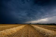 Rain and Thunder (Ellen van den Doel) Tags: wheat natuur netherlands nature graan overflakkee nederland zomer clouds goeree landschap outdoor polder juli tarwe landscape 2019 wolken field sommelsdijk zuidholland