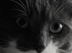 Look (carlo612001) Tags: cat cats kitten kittens kitty puppy puppies gatto micio gatta micia gatti occhi eyes look
