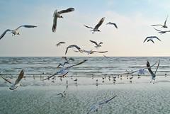 Seagulls. (denkuznets81) Tags: seagull sea seascape azov nature bird donbass море азовскоеморе природа чайка птица мариуполь донбасс