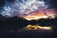 Evening mood at the pont (HeiJoWa) Tags: pond weiher stimmung atmosphere atmosphäre scenery landscape water saarland deutschland herrnergal samyang samyang12mmf2 alpha 6000 sony alpha6000 sky wolken clouds himmel sunset sundown sonnenuntergang enten ducks apsc