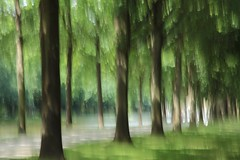 Hirschgraben (ebergcanada) Tags: abstract intentionalcameramovement icm tree germany kassel