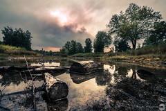 surae I (bjdewagenaar) Tags: photography photograph photographer photooftheday sony sonyalpha sonyphotographer sonyimages sonya sonya7riii sonygm sonygmaster wideangle landscape landscapephotography nature forest trees water reflection logs sky clouds fullframe mirrorless raw lightroom dutch holland surae dorst